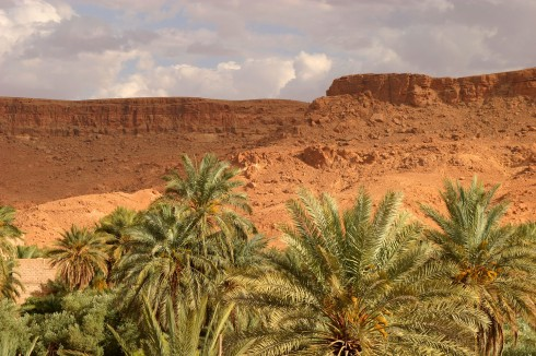 Date Palm Valley